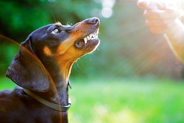 I cani piccoli subiscono spesso l' antropomorfizzazione