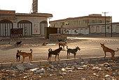 Il cane domestico ed i cani ferali