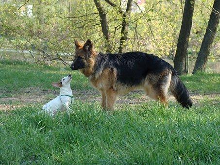 Per avere un Nuovo cane in casa è necessario che l'incontro con il cane che già vive con noi sia fato in territorio neurale.