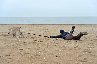 Cane tira bambino sulla spiaggia attaccato al guinzaglio. Addestramento del cane e dell'uomo necessari a volte.