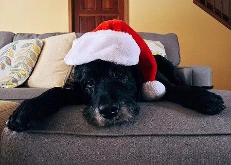 Cani e Natale