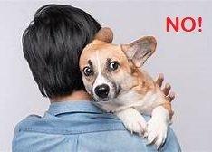 Fuochi d'artificio: il cane non va consolato!