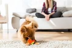 Distrarre il cane con il gioco