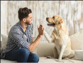 Con il linguaggio degli odori i cani ci leggono dentro meglio di un sensitivo