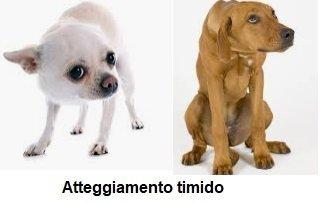 Comunicazione di insicurezza e sottomissione del cane