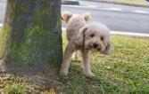 Per un cane marcare un albero è come lasciare un messaggio nel linguaggio degli odori
