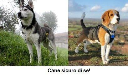 Linguaggio del corpo comunicazione confidente del cane