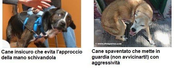 Comunicazione di insicurezza e paura nel linguaggio del cane