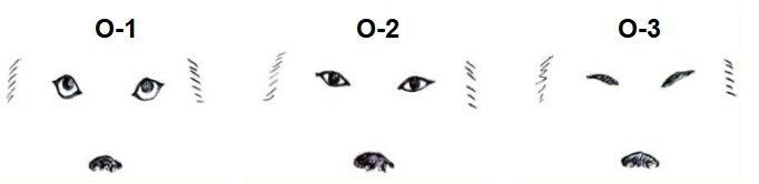 Gli occhi del cane. Un mezzo comunicativo