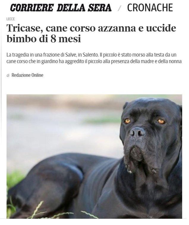 Quando i cani mordono i bambini i danni possono essere irreparabili